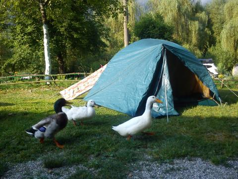 Camp Vili